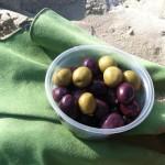In Israel, the Desert is Full of Surprises